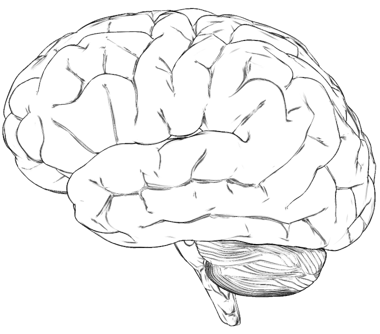brain drawing with labels - photo #28